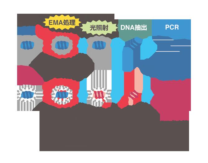 PCRによる生菌由来DNAの選択的な検出方法